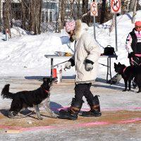 Une activité de Wouf Laurentides : le propriétaire marche à reculons dans un zigzag alors que son chien le suit, photo : Carole Bouchard