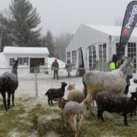 Une mini ferme pour le plaisir des tous !   Photo courtoisie de la Municipalité de Piedmont