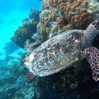 Goidhoo Atoll. – Photo Diane Brault