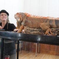 Un iguane qui, bien à l'aise, tout près de son propriétaire, attirait des regards suspicieux pour certains et intéressés pour d'autres. Les animaux de Repti-Zone, perroquets, un serpent jaune, crocodile, oiseaux divers, furent l'attraction de la journée. – photo : Yves Briand
