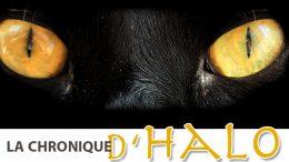 Halo le chat -Journal des citoyens de Prévost