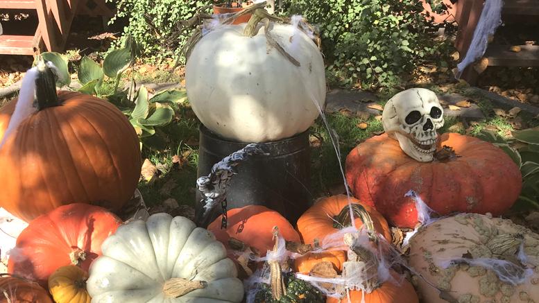 Journal des citoyens - Halloween