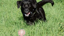 Journal des citoyens - psychologie canine