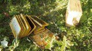 miel et ours - journal des citoyens